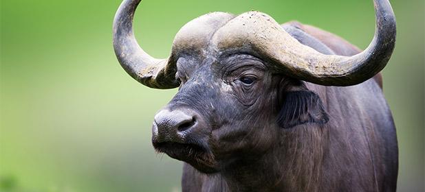 Il Guerrilla Marketing e il potere delle bufale